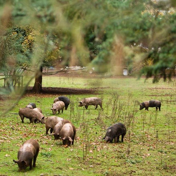 Partner Spotlight: Worden Hill Farm