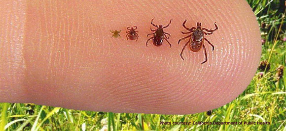 Image result for tick prevention collection