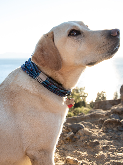 Unisex Adulto Talla /única Original Buff Dog Zarker Multi M//L Tubular Perro