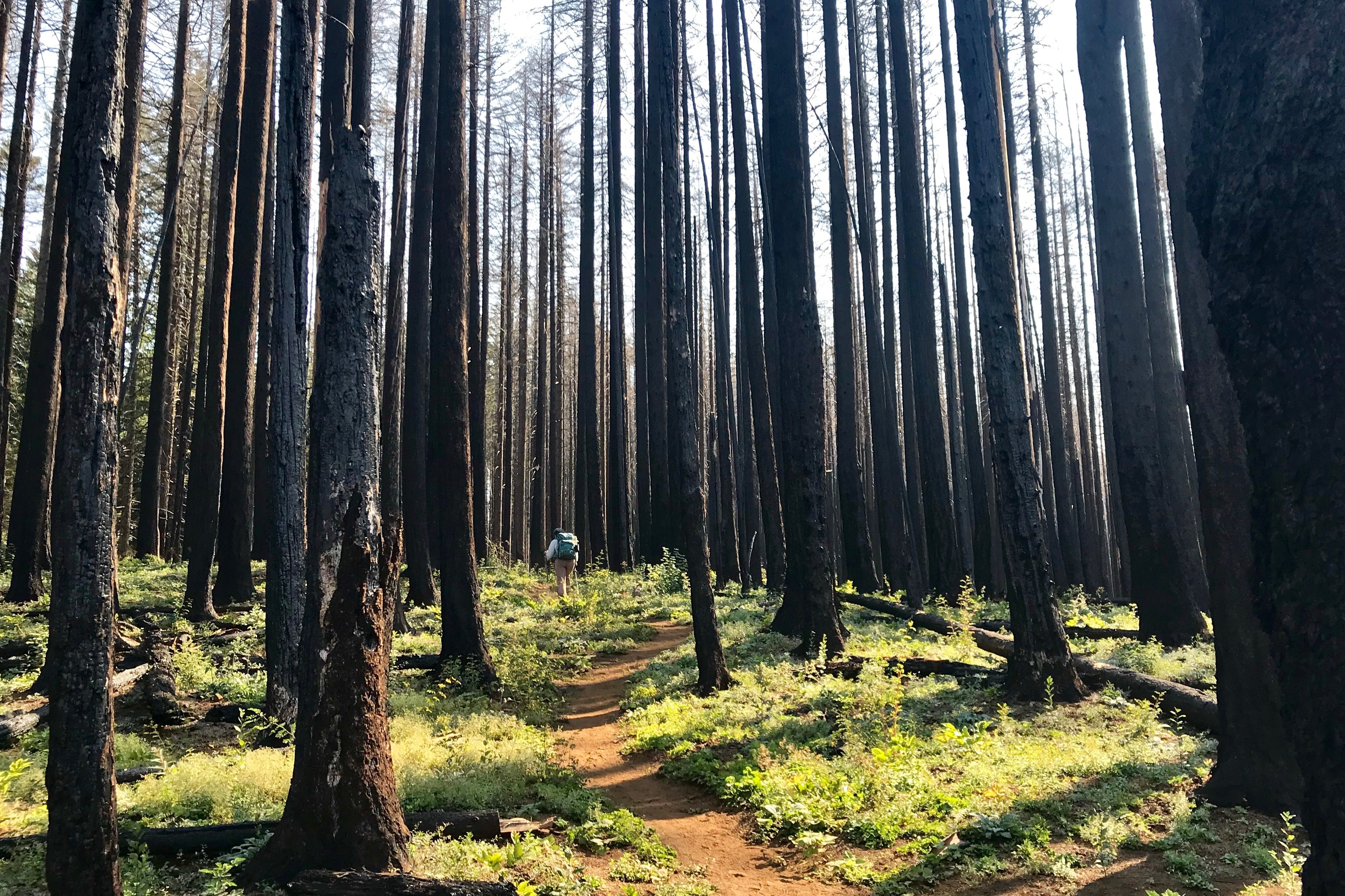 Forest Disturbances and Fire Ecology, OR