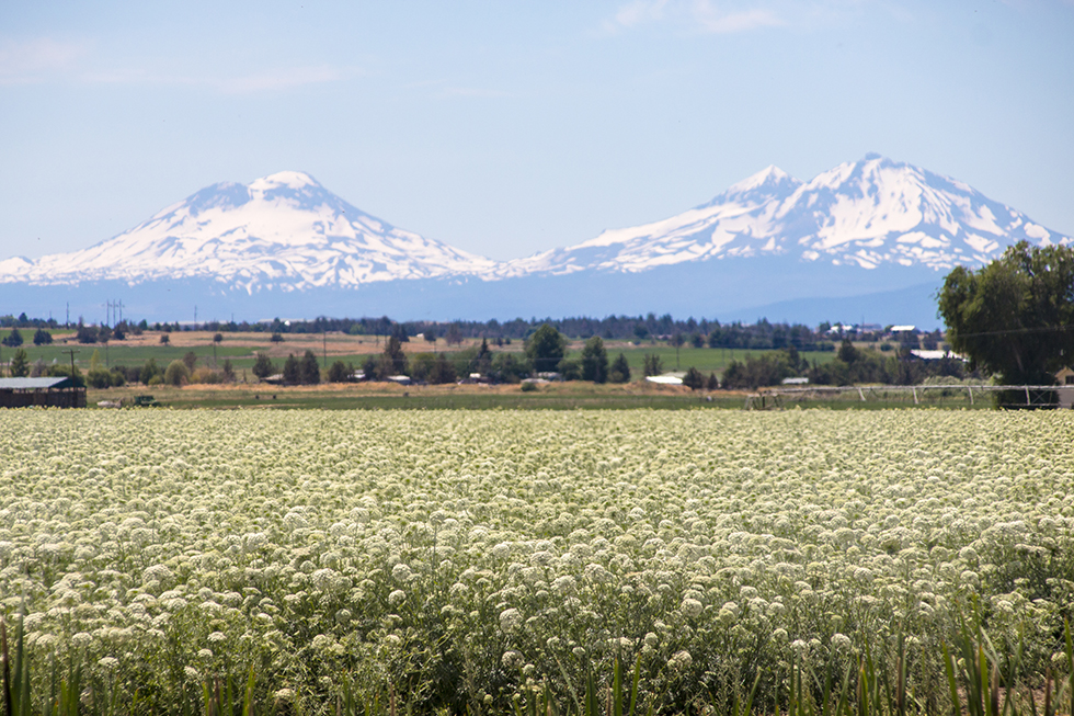Three Sisters Oregon
